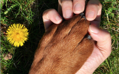 Caring for your dog in hot weather
